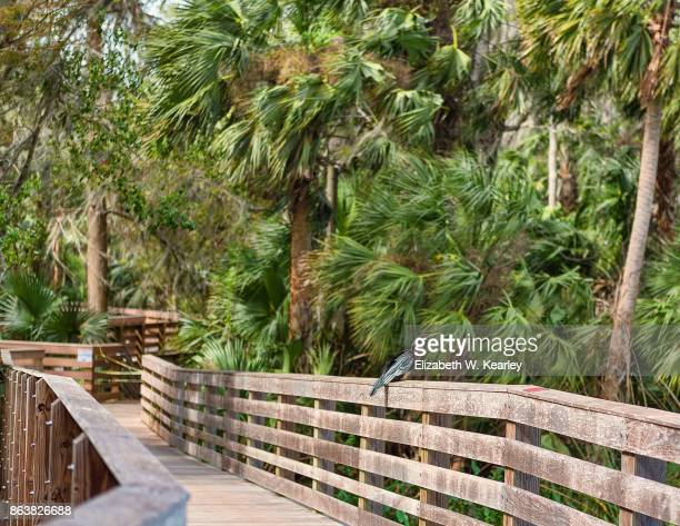 wooden walkway at gilbert park - palmetto florida stock pictures, royalty-free photos & images