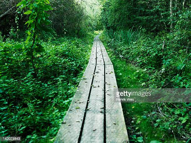 Wooden walkway in lush forest