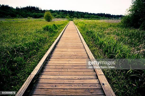 Wooden walkway in rural field