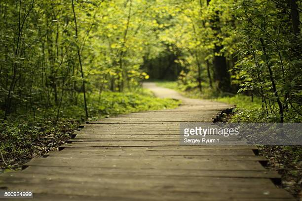wooden walkway - differential focus stock pictures, royalty-free photos & images