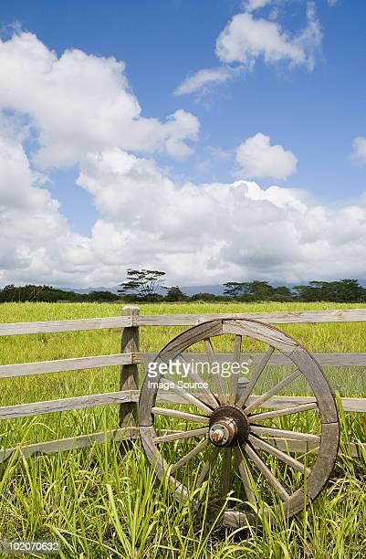 Wooden wheel and field in kauai, hawaii