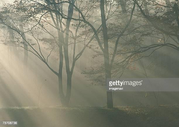 woodland and sunrise - wasserform stock-fotos und bilder
