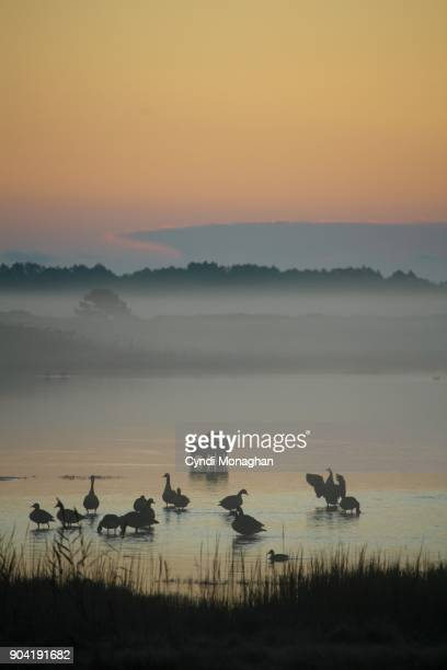 Woodland Animals Silhouetted in the Sunrise Mist