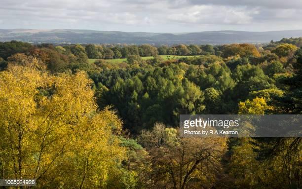 Woodland at Alderley Edge in autumn, Cheshire, England