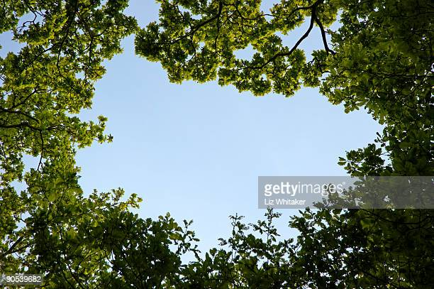 woodland canopy - low angle view stock pictures, royalty-free photos & images