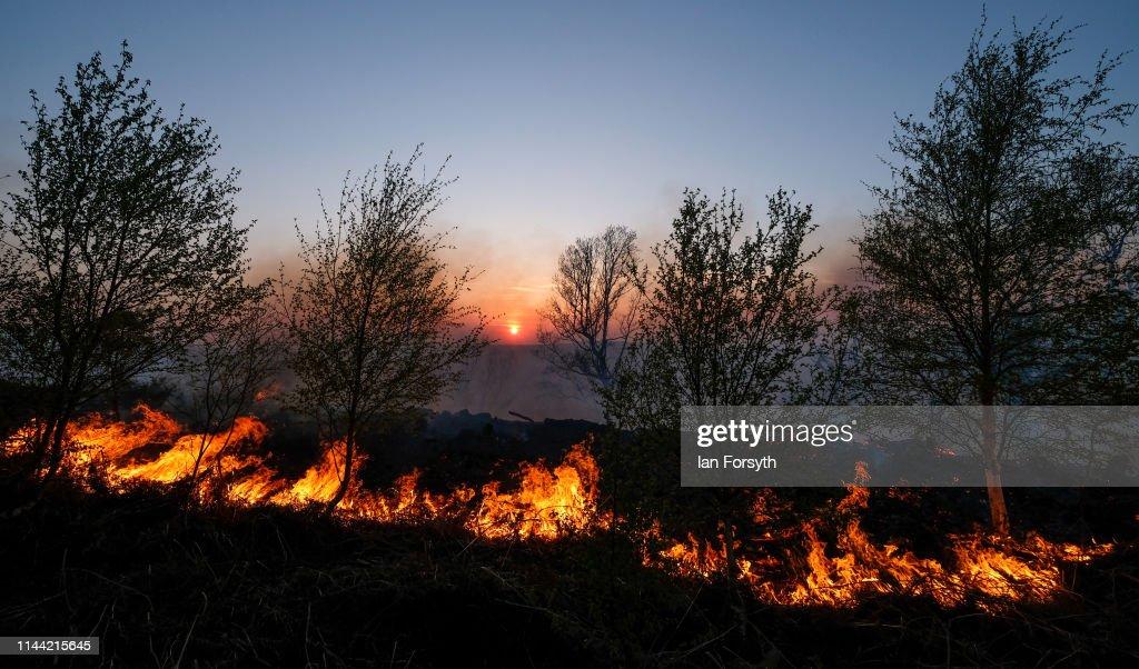 GBR: Cleveland Fire Brigade Dampen Down A Woodland Fire