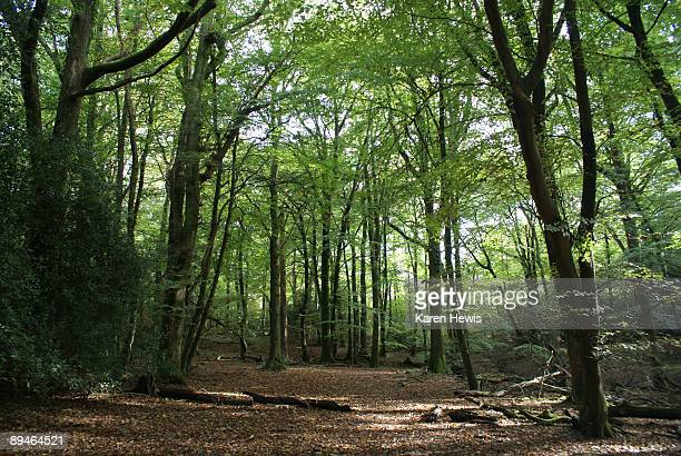 woodland glade - woodland stock pictures, royalty-free photos & images
