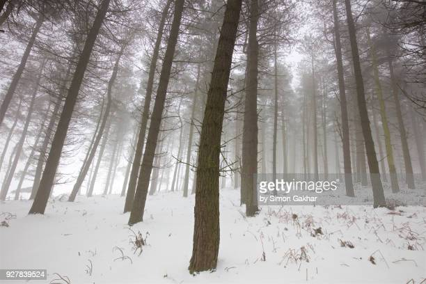 Woodland in Winter with Mist