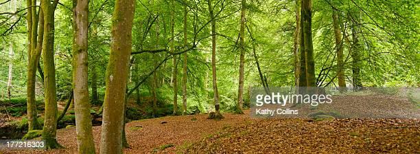 woodland interior - アバフェルディ ストックフォトと画像