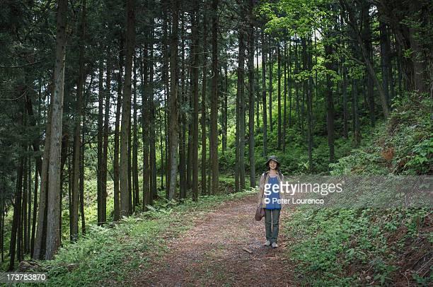 woodland path - peter lourenco 個照片及圖片檔