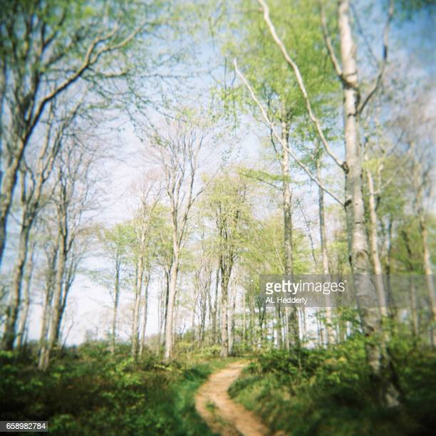 Woodland Path (Holga film)