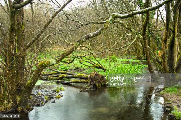 woodland pond - nigel owen stock pictures, royalty-free photos & images