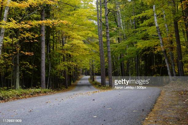 woodland scene - new hampshire stock pictures, royalty-free photos & images