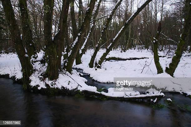 a woodland stream in snow, nr manaton, dartmoor national park, devon, great britain. - erle stock-fotos und bilder
