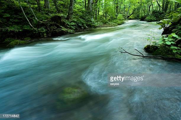 Wald stream