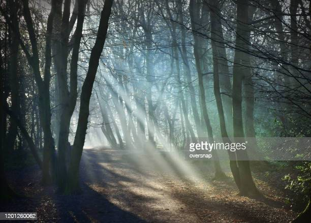 woodland sunbeams - fog stock pictures, royalty-free photos & images
