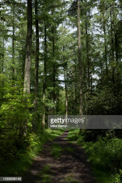 Woodland trees along a nature trail in Shropshire on 6th June 2021 in Ludlow, United Kingdom. These woods either side of the pathway are a mix of...