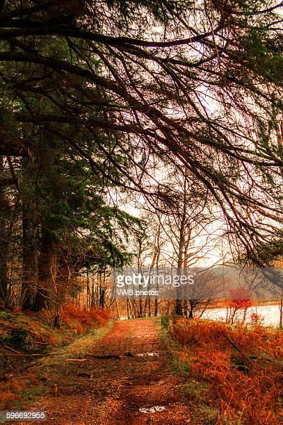 Woodland walk in Autumn beside Loch Dubh-ghlas