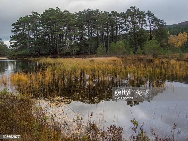 Woodland walks by Loch an Eilein in Autumn