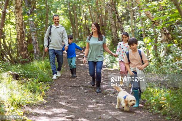 woodland walks - walking stock pictures, royalty-free photos & images