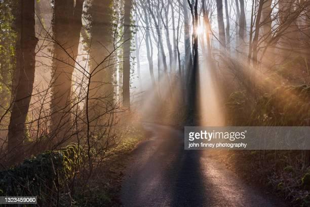 woodland wonderland, castleton, derbyshire, peak district. uk - national wildlife reserve stock pictures, royalty-free photos & images