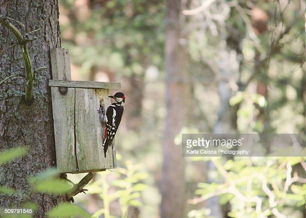 Woodpecker perched on little wood house
