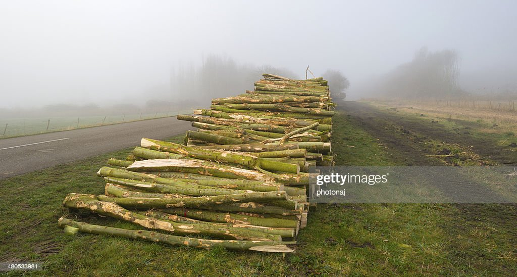 Woodpile near a forest in a foggy winter : Stockfoto