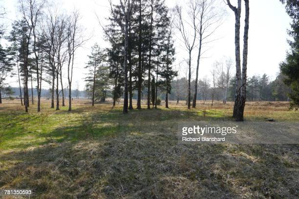 Woods and heathland at the site of the former BergenBelsen German Nazi concentration camp in Lower Saxony Germany 2014 The site is now a museum and...