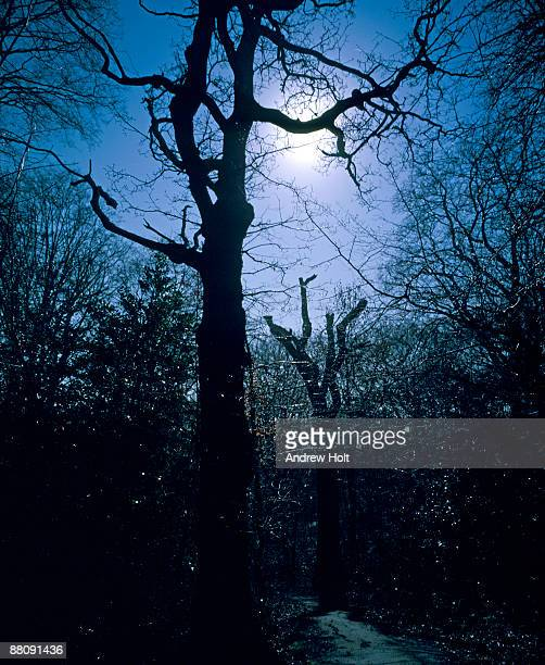 Woods in snow at night by full moon
