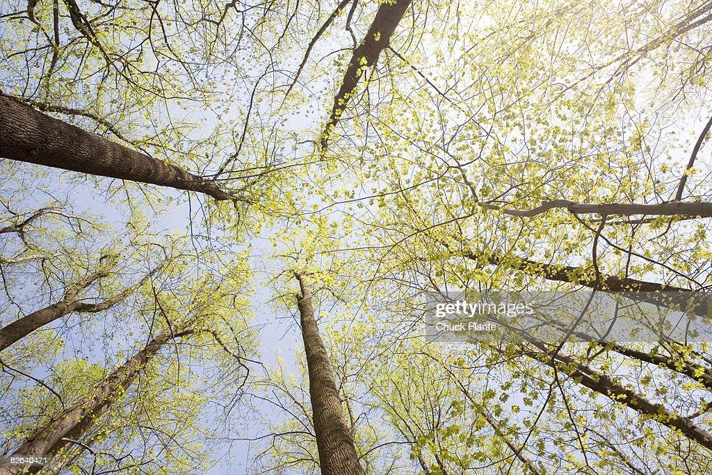 Woods in Springtime : Stock-Foto