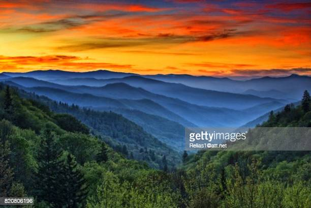 woods - parque nacional das great smoky mountains - fotografias e filmes do acervo