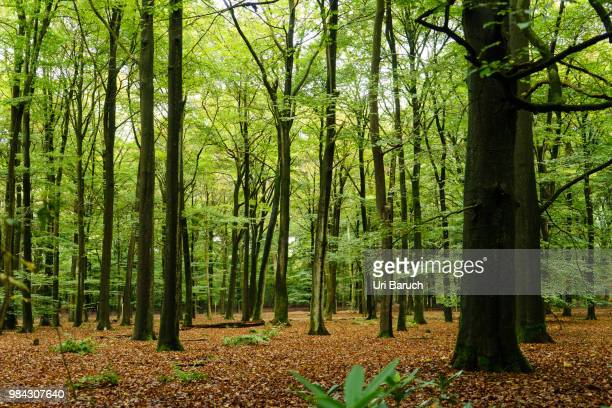 woods - barulho stock pictures, royalty-free photos & images