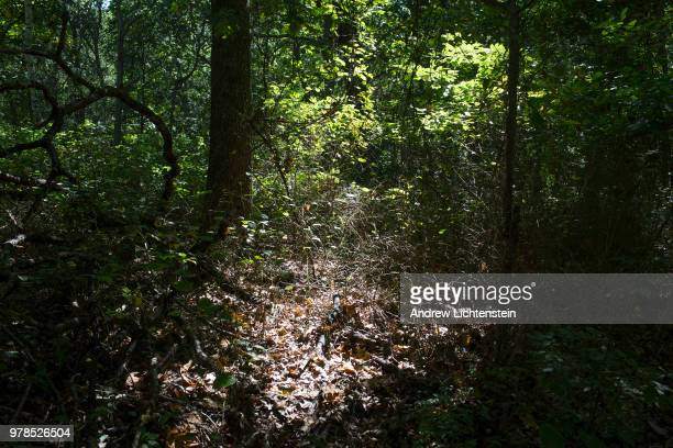 Woods tall grass and shrubs are natural habitat for the deer tick which is responsible for the Lyme disease epidemic on October 1 2017 in Shelter...