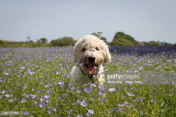woof - s0ulsurfing stock pictures, royalty-free photos & images