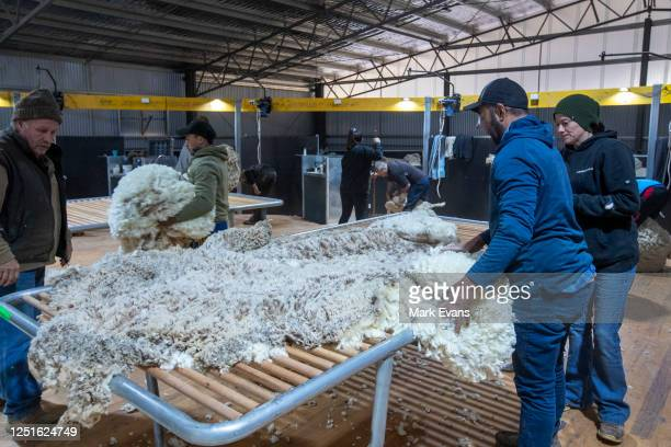 Wool classers sort a merino fleece at the new wool shed Yathonga Station on June 08, 2020 in Louth, Australia. Owners Stuart and Gabie Le Lievre...