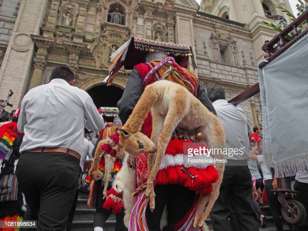 A wool masked man with a llama taxidermy participating of Quechuaspeaking Indigenous people devotees of San Sebastian carry on a religious procession...