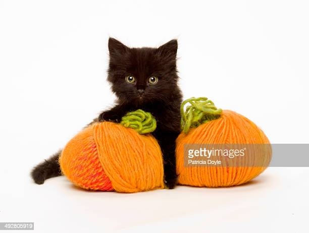 wooley pumpkins - pumpkin cats stock pictures, royalty-free photos & images