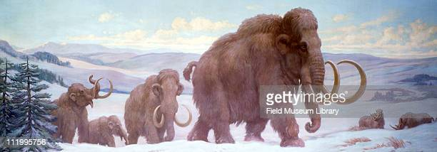 Woolly Mammoths and Rhinoceros Cenozoic Europe in Late Pleistocene time000 years ago mid to late 20th century Painting by Charles R Knight