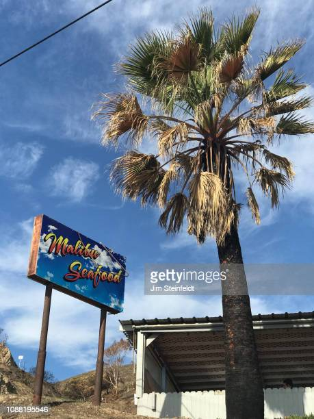 Woolsey fire creates burnt palm tree at Malibu Seafood along the Pacific Coast Highway in Malibu California on December 16 2018 Photo by Jim...