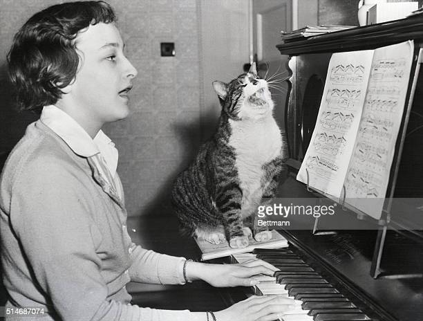 Worcester Park, Surrey, England: Hep cat. A real live kitten on the keys, this music-loving feline lends vocal accompaniment to his mistress in...
