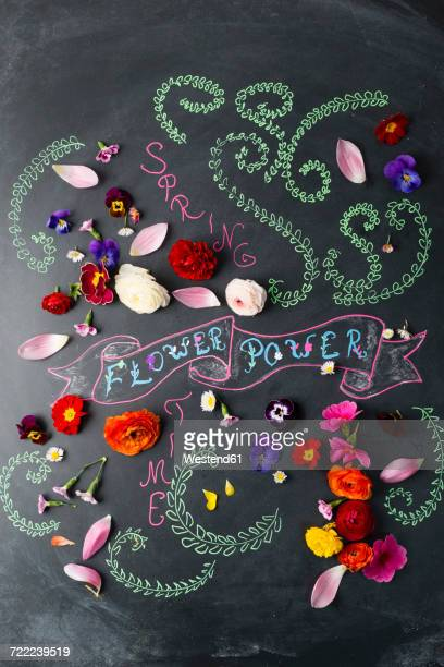 Word Flower Power and blossoms on blackboard