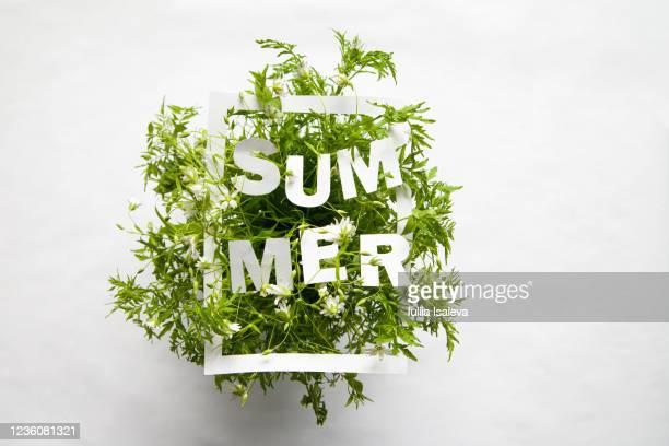 word summer on green bouquet - 束 ストックフォトと画像