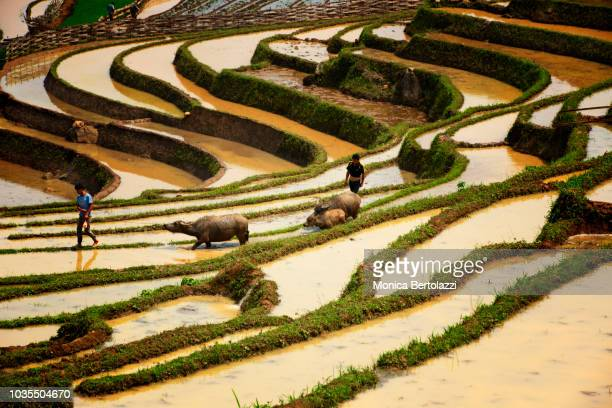 Work in the rice fields