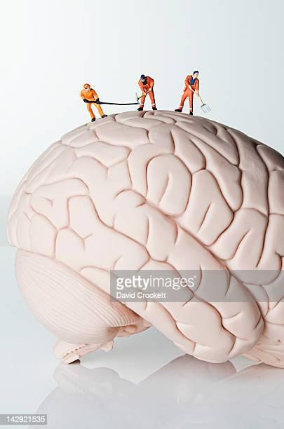 Work on brain