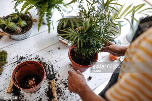 work that dirt, save the earth - houseplant stock pictures, royalty-free photos & images