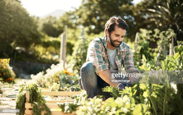 work that dirt, save the earth - gardening stock pictures, royalty-free photos & images