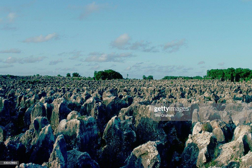 Phosphate Fields, Nauru, South Pacific : News Photo