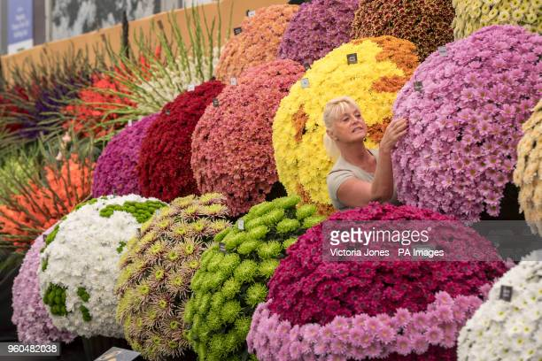 A worker adjusts a floral display as preparations continue for this year's RHS Chelsea Flower Show at the Royal Hospital Chelsea London