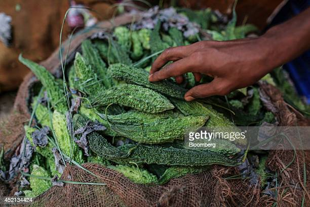 A worker arranges bitter melon at the Vashi Agricultural Produce Market Committee wholesale market in Mumbai India on Saturday July 12 2014 Prime...