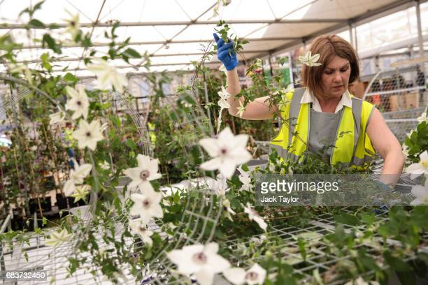 A worker arranges flowers around a structure at the RHS Chelsea Flower Show site at Royal Hospital Chelsea on May 16 2017 in London England...